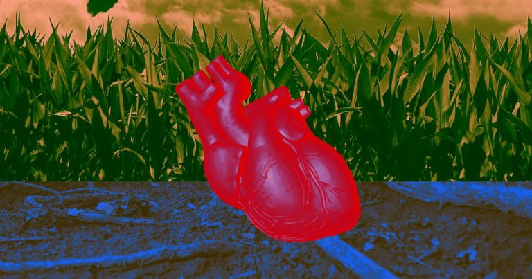 See Lab-Grown Human Heart Tissue Beat Like a Real Heart – Futurism