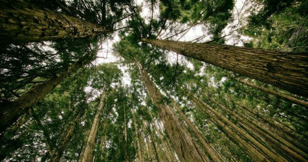 planting trillions trees cancel co2 emissions