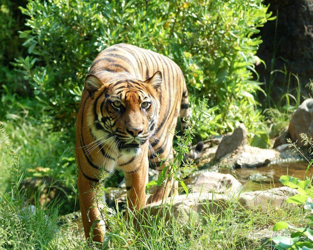 tiger 8057 1200x960